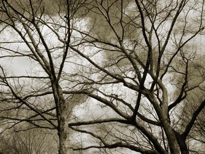 sample-5.jpg